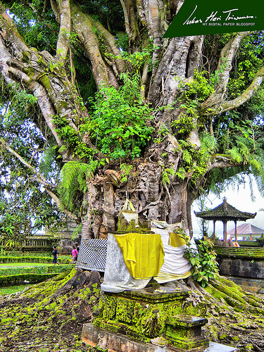 pohon-keramat